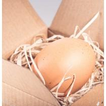 Annoncer votre grossesse à vos proches avec l''Eggstra